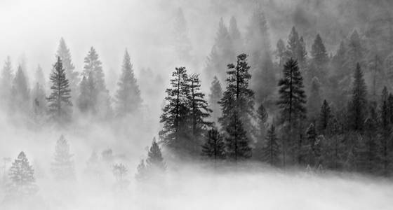 Fog and trees 7