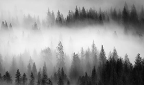 Fog and trees 8