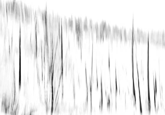 Fog and trees equivelent i