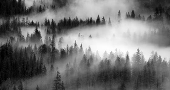 Fog and tress 3  yosemite
