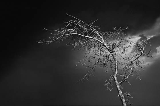 Trees no  3