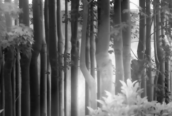 Trees no  6