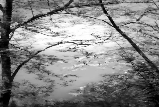 Trees no  7