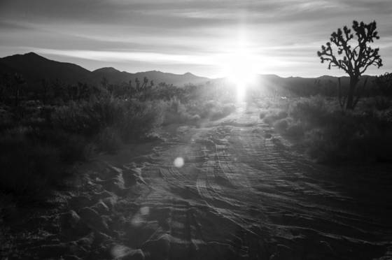 Joshua tree national forest 8