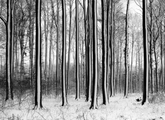 05 oreo trees