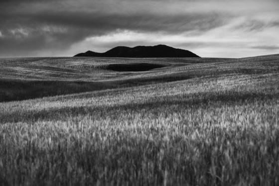 Black hole in a wheat field