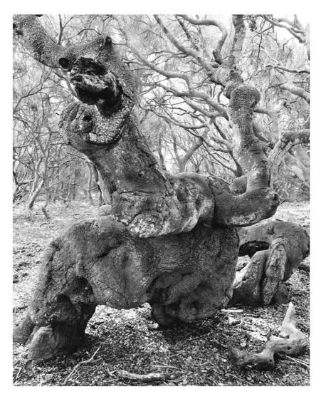 9    beowulf metamorphosis los osos