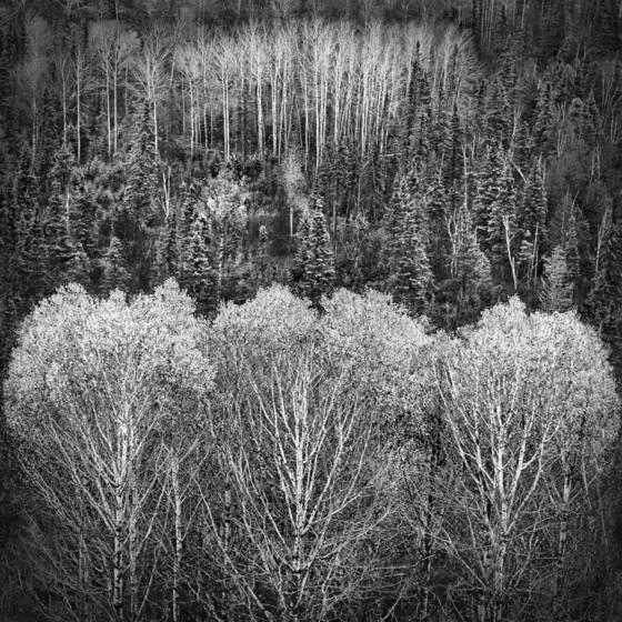 Trees lake superior minnesota