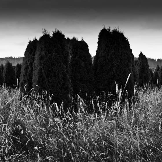 Warrior trees 4
