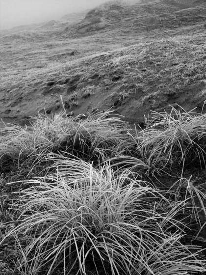 Winter in the dunes 2