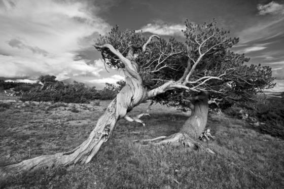Againstthe wind