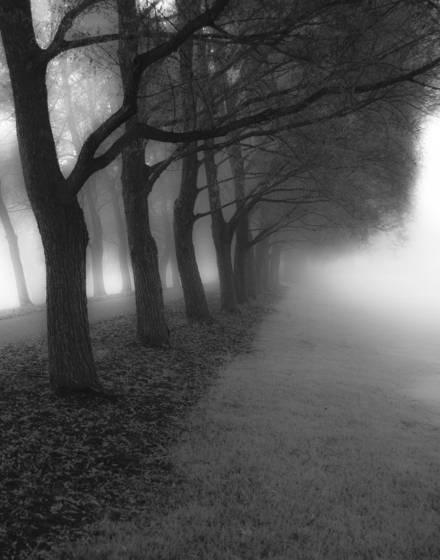 Willow walk ii