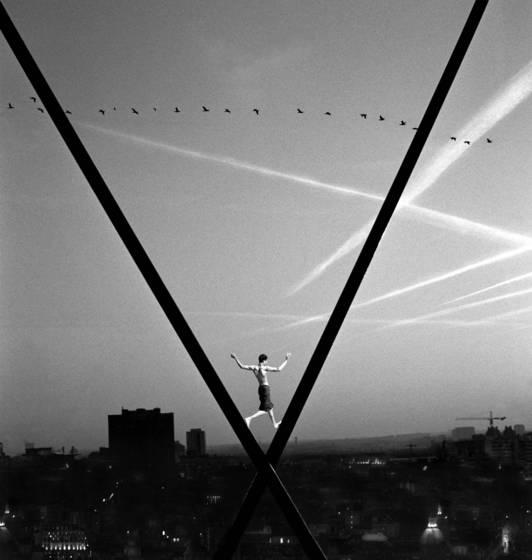Les oiseaux 2010