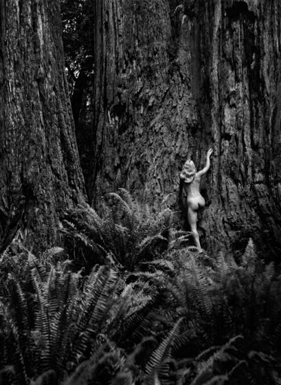 Redwood study 5