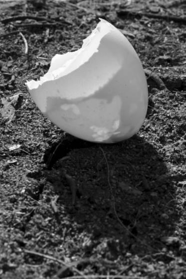 Eggshell 3