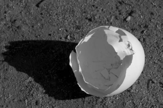 Eggshell 4