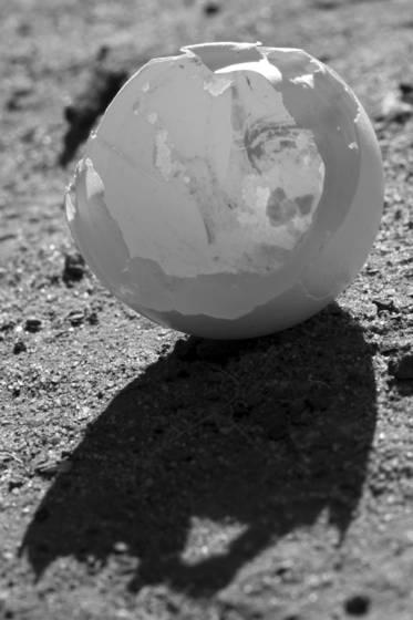 Eggshell 5