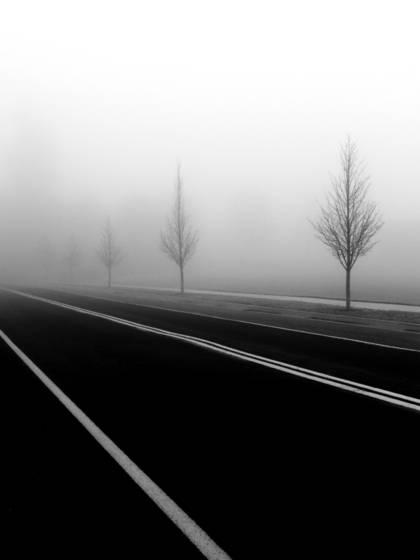 Treees in fog