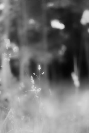 Dreamy weed jpg