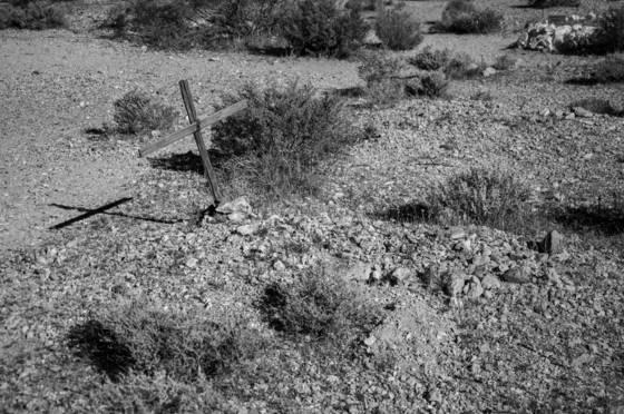 Bull frog cemetery 4