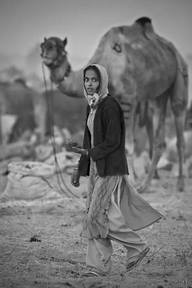 Woman gathering camel dung