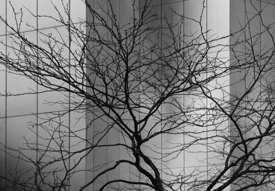 Skyscraper and tree