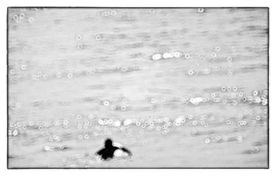 Ocean dreams 6