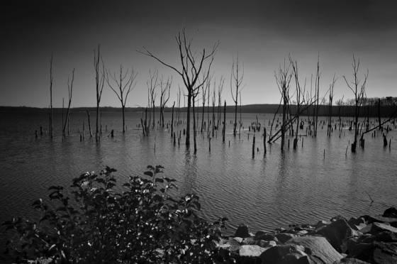 Wetlands  04