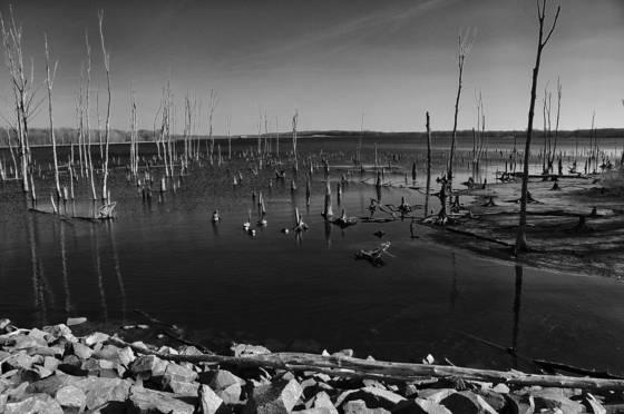 Wetlands  05