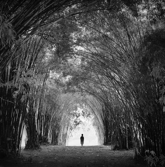 Tunnel of bamboo