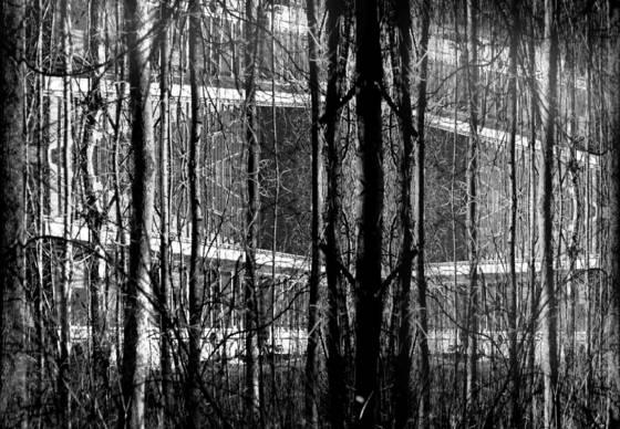 Winter at sapsucker woods 10