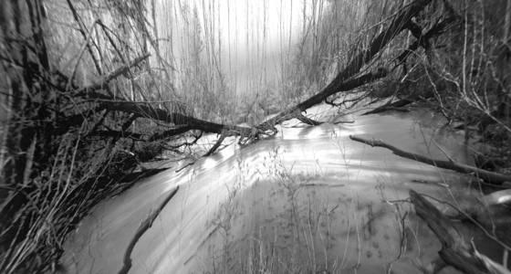 Winter at sapsucker woods 9