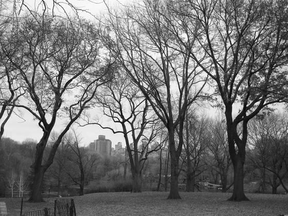 Skyline through the park