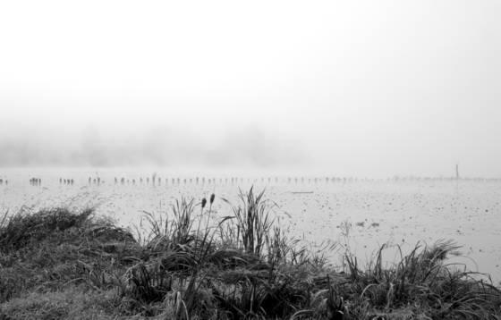 Bay park fog 1