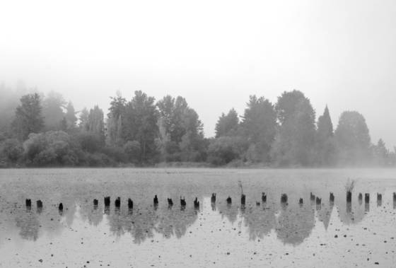 Bay park fog 2