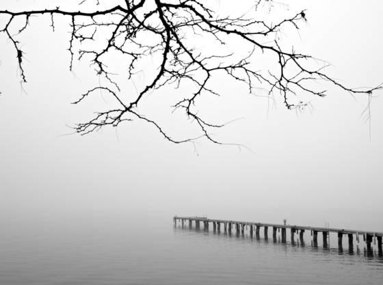 Bay park fog 8