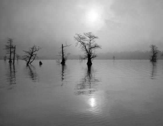 Cypress wetlands