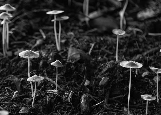 Mushrooms in backyard