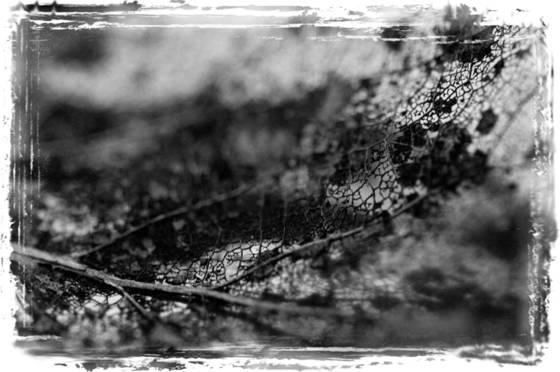 Vegetal lace