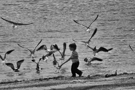 Boy and  sea gulls