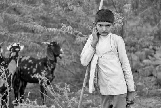 Rabari shepard