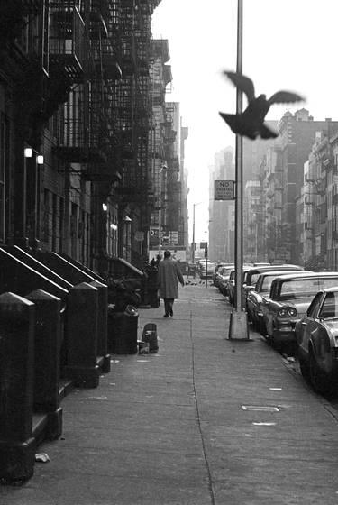 Street scene  with  pigeon