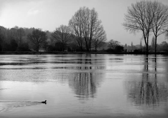Thames pastoral
