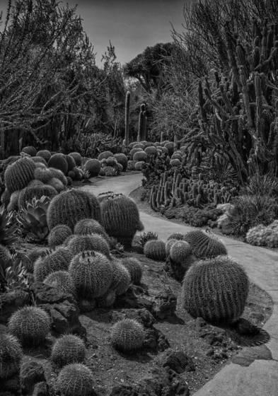 Cactus lane