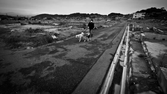 Routine dog walk