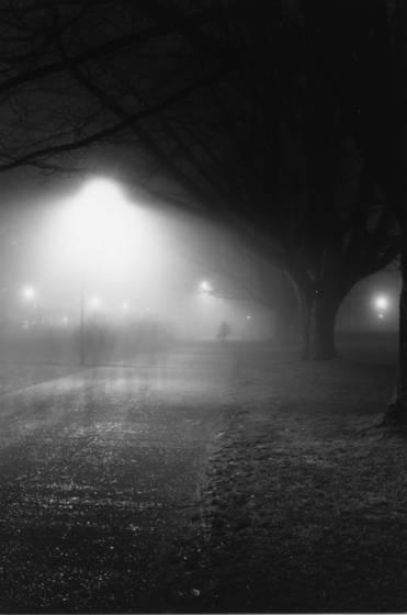 Foggy evening 1