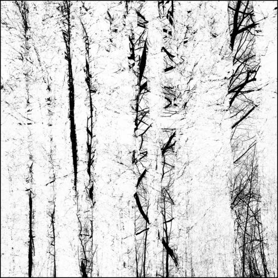Winter forest impressions