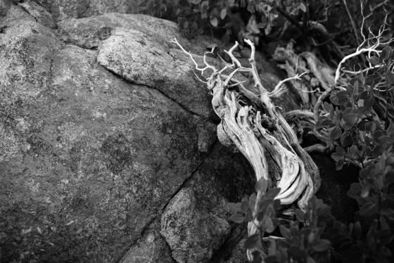 Dead wood on rock