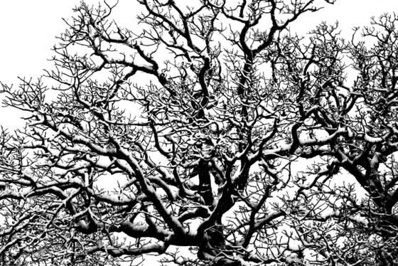 Snow on post oak