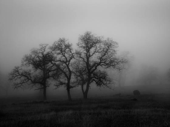 Three trees with fog